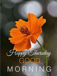 Good Morning Thursday Images, Happy Thursday Images, Thursday Greetings, Good Morning Happy Thursday, Happy Thursday Quotes, Good Morning Images Flowers, Good Morning Cards, Good Morning Texts, Good Morning Picture