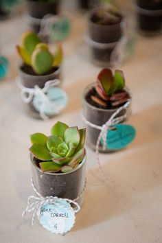 Unique escort cards idea ~ succulents! From Chris & Vida's beautifully simplistic, teal & sea foam green, springtime wedding in Northern Virginia. Images by Kelly Ewell Photography.