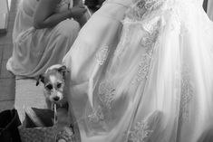 #valokuvaaja #valokuvaajaturku #hääkuvaaja #hääkuvaajatturku #hääkuvaus #wedding #hääkuvaajat #valokuvaajat #valokuvaus #häävalokuvaaja #photography  #wedding2019 #häät2019 #weddinginspiration #haakuvaajat #bride2019 #turku #documentaryweddingphotography #hääyrittäjät #haatlehti #haatFI #weddingphotographer #savethedate #portraits #portrait #weddingdress #bride #portraitphotography #weddingphoto #dog One Shoulder Wedding Dress, Wedding Dresses, Photography, Fashion, Bride Dresses, Moda, Bridal Gowns, Photograph, Fashion Styles