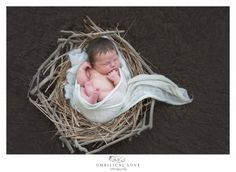 a newborn baby wrapped up in a gorgeous organic wrap in a twig nest