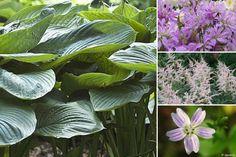 10 plantes vivaces d'ombre pour composer un massif - Promesse de Fleurs Bergen, Anemone Du Japon, Geranium Vivace, Plant Leaves, World, Pins, Gardens, Perennial Plant, Garden Landscaping