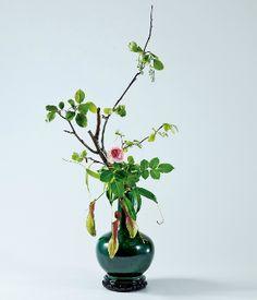 Ohara School of Ikebana international Bonsai, Japanese Flowers, Japanese Art, Ikebana, Art Floral, Floral Arrangements, Flower Arrangement, Eye For Beauty, Different Plants