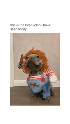 Animal Jokes, Funny Animal Memes, Dog Memes, Funny Animal Videos, Cute Funny Animals, Cute Baby Animals, Funny Cute, Funny Dogs, Cute Dogs