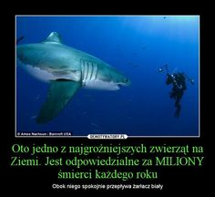 Funny Stories, True Stories, Best Memes, Funny Memes, Polish Memes, Earth Song, People Can Change, Make Smile, Quotations