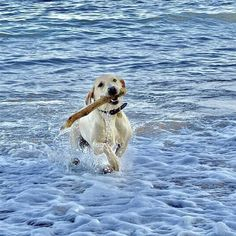 In just 2 days time on the October you can freely walk your dogs on the beaches in East Devon. Your dogs can now feel the sand between… Dog Friendly Holidays, Group Of Dogs, Dog Books, Holiday Park, Day And Time, Dog Walking, Dog Art, Dog Friends, Devon