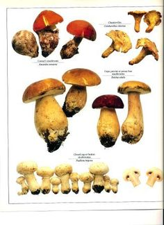 Edible wild  Mushrooms.....wish I had paid more attention when my Dad took me with him