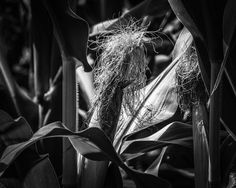 8x10 Black and White Print Close-Up View Of Growing by PelliculArt