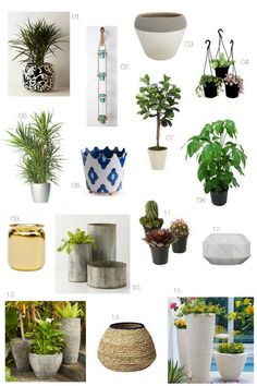 House Plants + Indoor Containers | The Effortless Chic