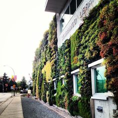 Great shot of the Semiahmoo Library's living wall!