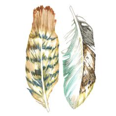 Items similar to PRINT of feather painting - feather art - sea hawk - in copper rust / sienna brown / indigo blue / teal / yellow ocher / mint on Etsy Watercolor Feather, Feather Painting, Feather Art, Feather Illustration, Illustration Art, Brown Flowers, Teal Yellow, Large Prints, Landscape Paintings