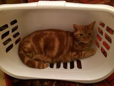 Thomas in a basket, super cute
