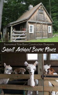 10 Pet Tips Animal Shelter Organization Ideas Small Barn Plans, Farm Plans, Small Barns, Pole Barn Plans, Goat Barn, Farm Barn, Farm Shed, Alpacas, Pole Barn Construction