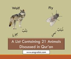 21 Animals Mentioned in Quran List Of Animals, Holy Quran, Dog Names, Pet Birds, Holi, Verses, Insects, Lion, Elephant