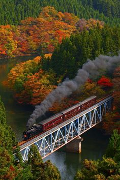 fall-inlovewith-autumn:  sweaters-tea-and-leaves:  Colored leaves and Steam // Masaki Takashima  Autumn/fall/halloween blog xx follows back similar xx