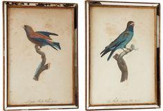 Framed Antique Bird Prints