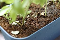 How to Grow an Herb Garden Indoors Year Round: 7 steps - wikiHow