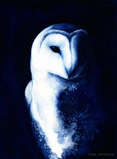 Night Vision Owl watercolour bird art blue - A4 archival giclee print