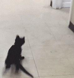 Ping Pong Ball Kitten