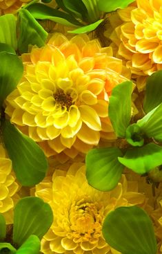 Dahlia. These are stunning!