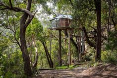 Lionel Buckett's extraordinary treehouse hotel in Australia's Blue Mountains