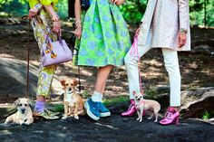 Four-legged models steal the show in this editorial
