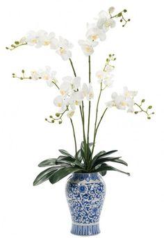 NDI Orchid Phalaenopsis