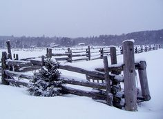 snowy fence line by ann j p on flickr