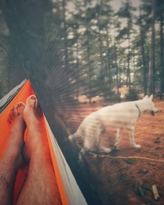 Got a chance to relax in my @grandtrunkgoods hammock out on the island while Rocky explored and chased after squirrels. #camping #takemecamping #greatoutdoors #livefolk #dogsofinstagram #huskiesofinstagram #husky #vsco #vscocam #vscogood #snapseed #rocky #rockysmodernlife #igersmaine #hammocklife #hanganywhere by @aj_bouffard