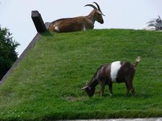 No lawn mowers allowed on roof.