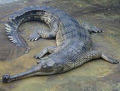 Crocodile and Alligator Paddock