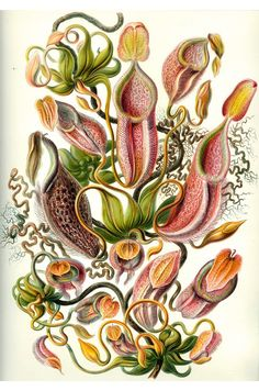 the complicated beauty of Ernst Haeckel