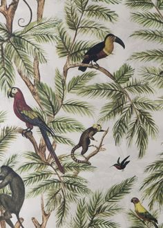 Jungle Print Natural World by Graduate Collection - Multi - Wallpaper : Wallpaper Direct Wallpaper Samples, Print Wallpaper, Animal Wallpaper, Pattern Wallpaper, Photo Wallpaper, Tropical Wallpaper, Botanical Wallpaper, Interior Wallpaper, Bathroom Wallpaper