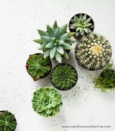 Do you have succulents, cactus or houseplants at home? Which type of plants do you love? Green Plants, Air Plants, Indoor Plants, Potted Plants, Cacti And Succulents, Planting Succulents, Planting Flowers, Cacti Garden, Mini Plantas