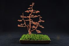 Copper Triple Trunk £150. simple elegant hand crafted bonsai