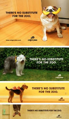 Calgary Zoo Ad Campaign