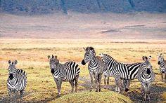 Tanzania safari: encounters in the Ngorongoro Crater -