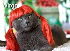 August 23 – September 22: Virgo Cats are very cerebral and introspected. They may seem calm and collected, but inside their feline minds are working overtime, meticulously planning world domination (or whatever it is that cats think about when they are thinking seriously about something).