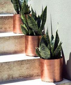 Pretty copper pots.
