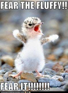 cute fluffy animals - Google Search