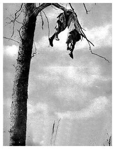 WWI; Two dead French soldiers blown onto a tree
