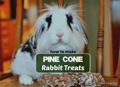 Pine cone rabbit treats are a great way to provide stimulation and a healthy chew toy for your bunny. With a simple process you can prepare the pine cone Homemade Rabbit Treats, Diy Bunny Toys, Rabbit Information, Bunny Cages, Raising Rabbits, House Rabbit, Rabbit Farm, Guinea Pig Toys, Rabbit Toys