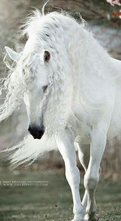 The 14 Most Beautiful Horses That You Ever Seen