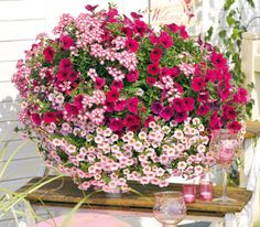 hot pink jazz container: 'Potunia Neon' petunia, 'Empress Strawberry' verbena & 'Aloha Tiki Soft Pink' calibrachoa