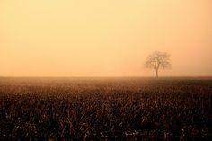 light in the fog by Carlotta Ricci - Photo 139606989 - Organic Architecture, Flat Earth, Big Tree, Light Art, Bowser, Mists, Wonderland, Skyline, Explore