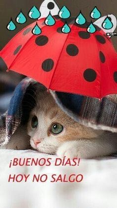 Good Morning Rainy Day, Good Morning In Spanish, Good Morning Inspirational Quotes, Bae Quotes, Spanish Humor, Happy Day, Anime Art, Teddy Bear, Thoughts
