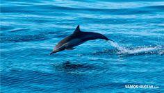 Delfín en el mar de Cortez