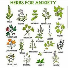 Herbs for Anxiety. Healing Herbs, Medicinal Plants, Natural Healing, Natural Medicine, Herbal Medicine, Herbs For Anxiety, Witch Herbs, Mosquito Repelling Plants, Anti Mosquito Plants