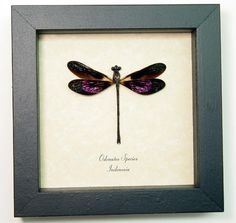 Real Framed Metallic Pink Damselfly by REALBUTTERFLYGIFTS on Etsy