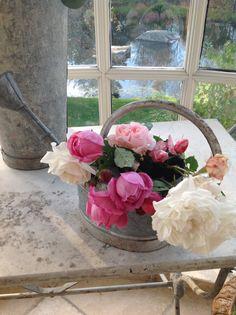 Garden roses!