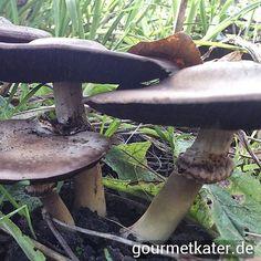 In meinem Garten gefunden #pilze #mushroom #gardening